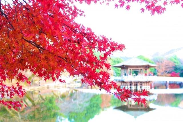 奈良公園紅葉フリー