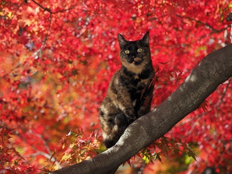 貓的京都寫真展