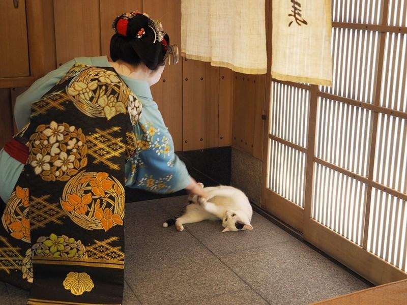 【已結束】透過貓看京都。岩合光昭的寫真展「貓的京都」將於5/18~6/4開始