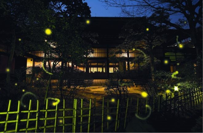 夏 螢火蟲 庭園