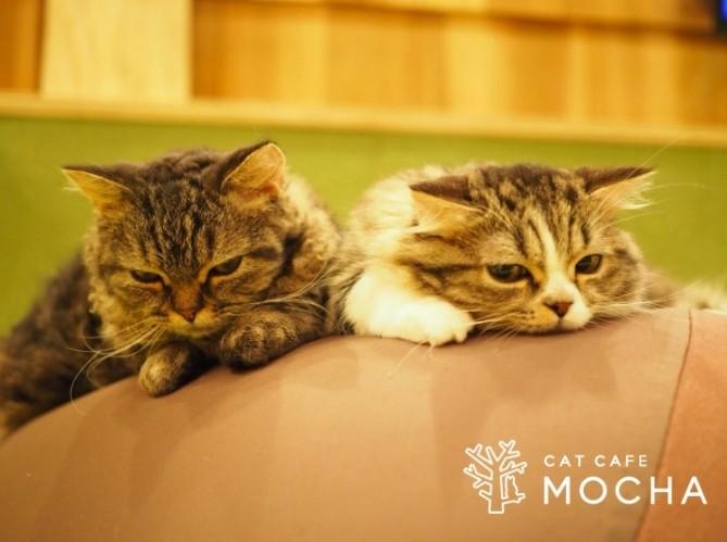 猫咪咖啡廳