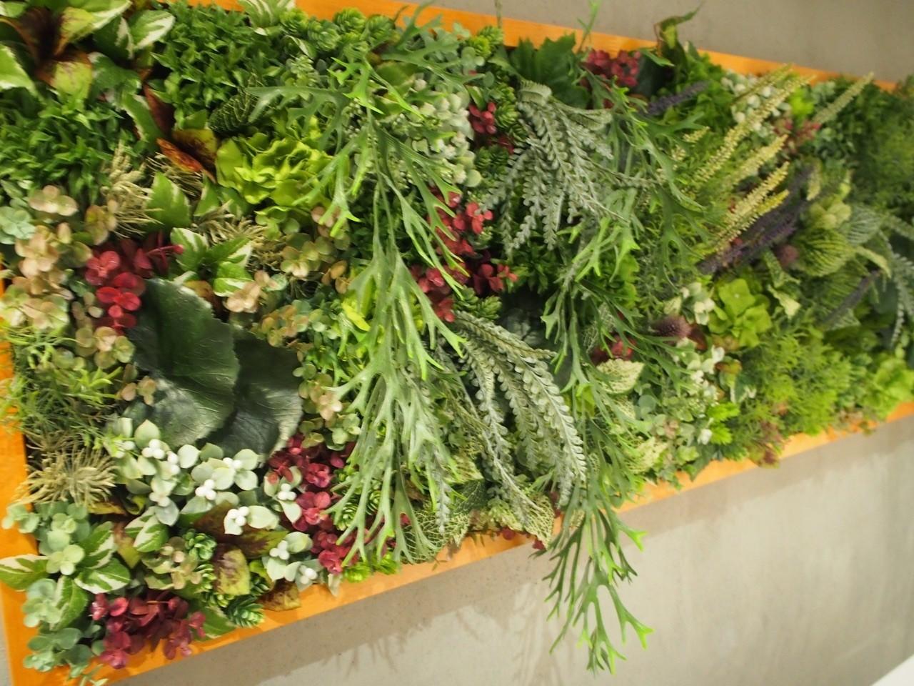 店內綠色植物擺設