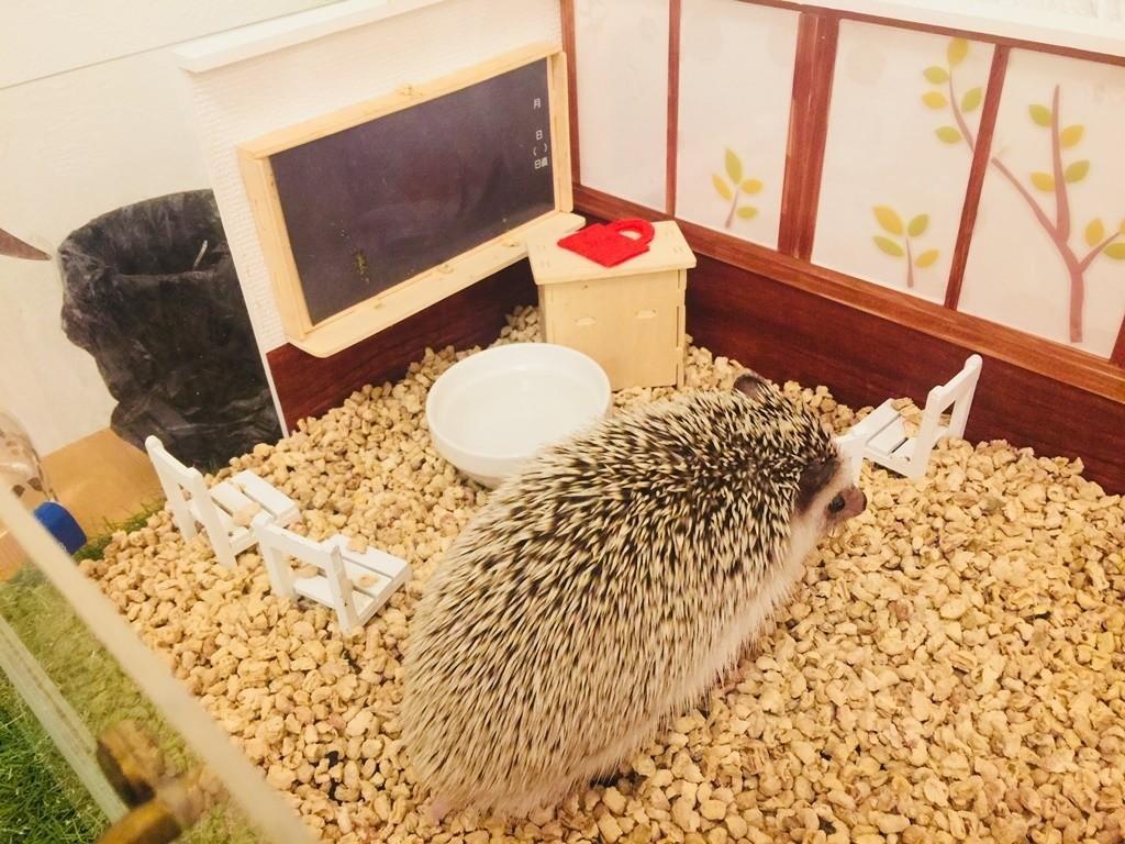大阪刺蝟咖啡廳CAFE DE HARI