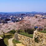s-鳥取城跡と桜