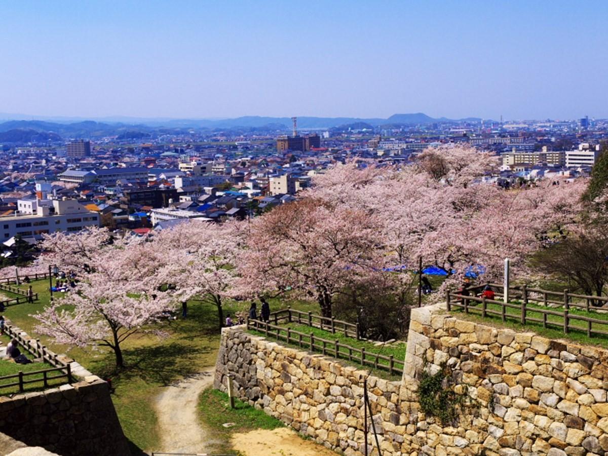 春天的久松公園